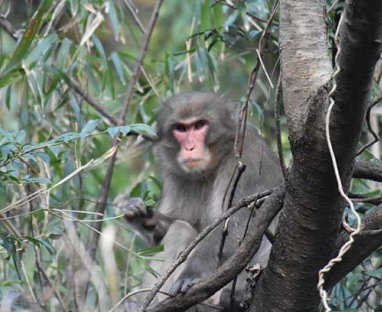猿被害対策